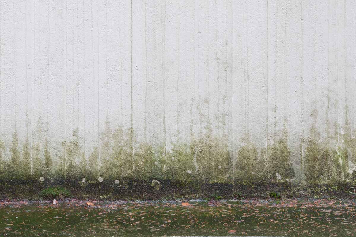 vårda dina väggar, annars kan det se ut såhär