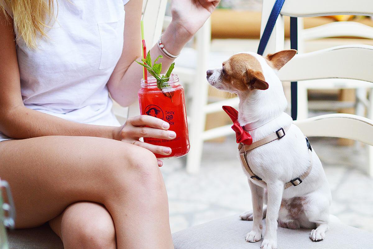 Professionella produkter för husdjur