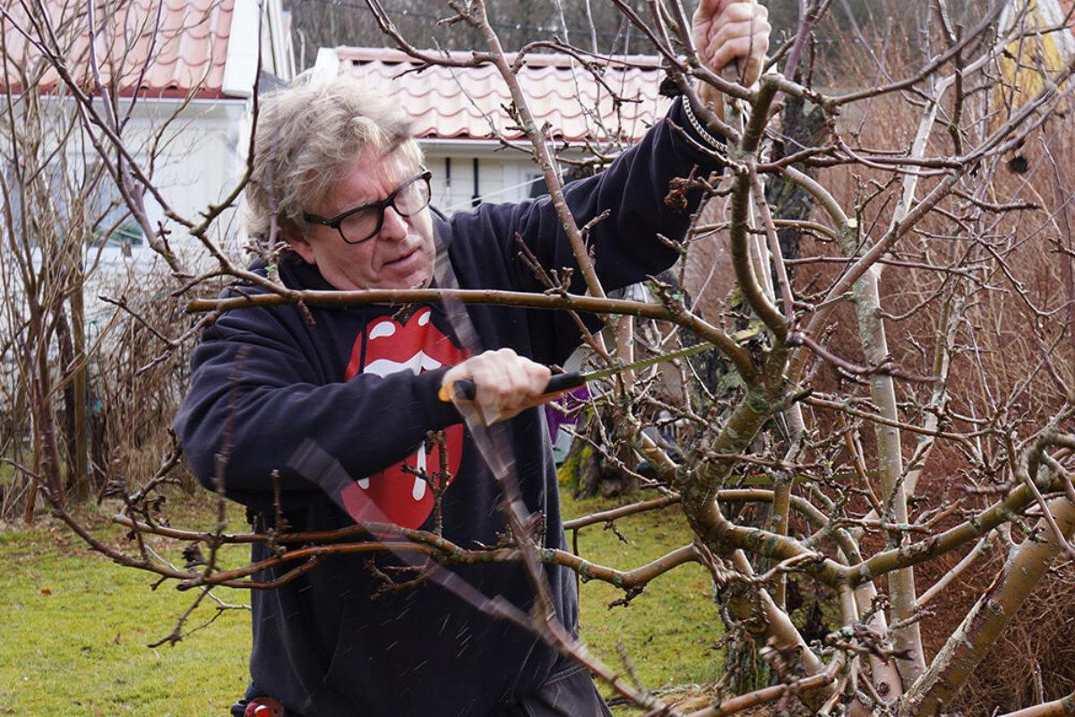 Det är en styggelse att beskära päronträd som äppelträd